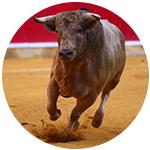Bullfighting in San Sebastian Spain