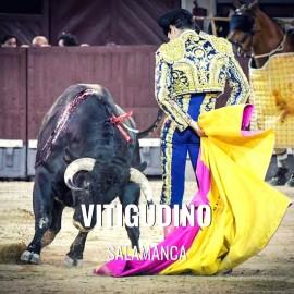Toros Vitigudino - Feria y Fiestas de agosto