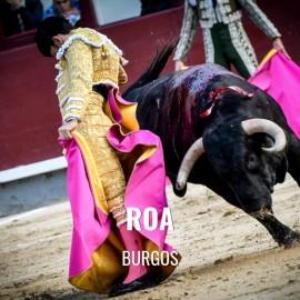 Entradas Toros Roa - San Roque and Ntra Sra de La Asunción
