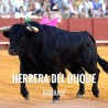 Bullfight ticket Herrera del Duque – Bullfighting Festival