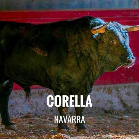 Entradas Toros Corella - Feria y Fiestas de la Virgen de las Mercedes y San Miguel