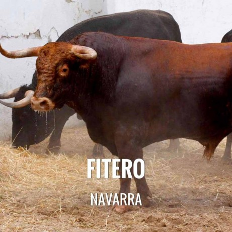 Bullfight ticket Fitero – San Raimundo Abad Bullfighting festival