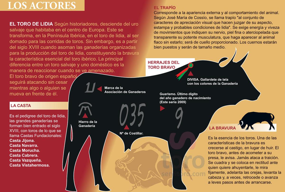 El toro de lidia, el toro bravo, casta, divisas