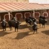 Arranca la Feria de Soria con la presencia de Diego Ventura en la corrida de rejones