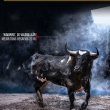 Two Livestock Challenges and a Contest Bullfight for the month of September