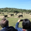 Seville's bullring company s is committed to the promotion and diffusion of Bullfighting