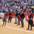 The great Day of Bullfighting